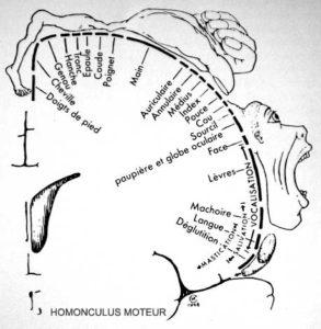 homonculus-moteur-NB