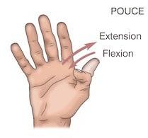 Flexion-extension pouce